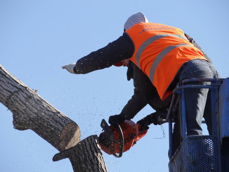 Tree being removed in chicago