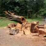 Tree Care Chicago