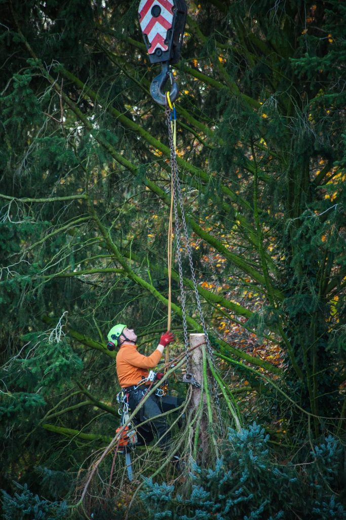 Tree Service Oak Park