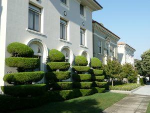 Residential Oak Park Tree Service