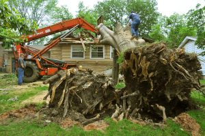 Stump removal Chicago