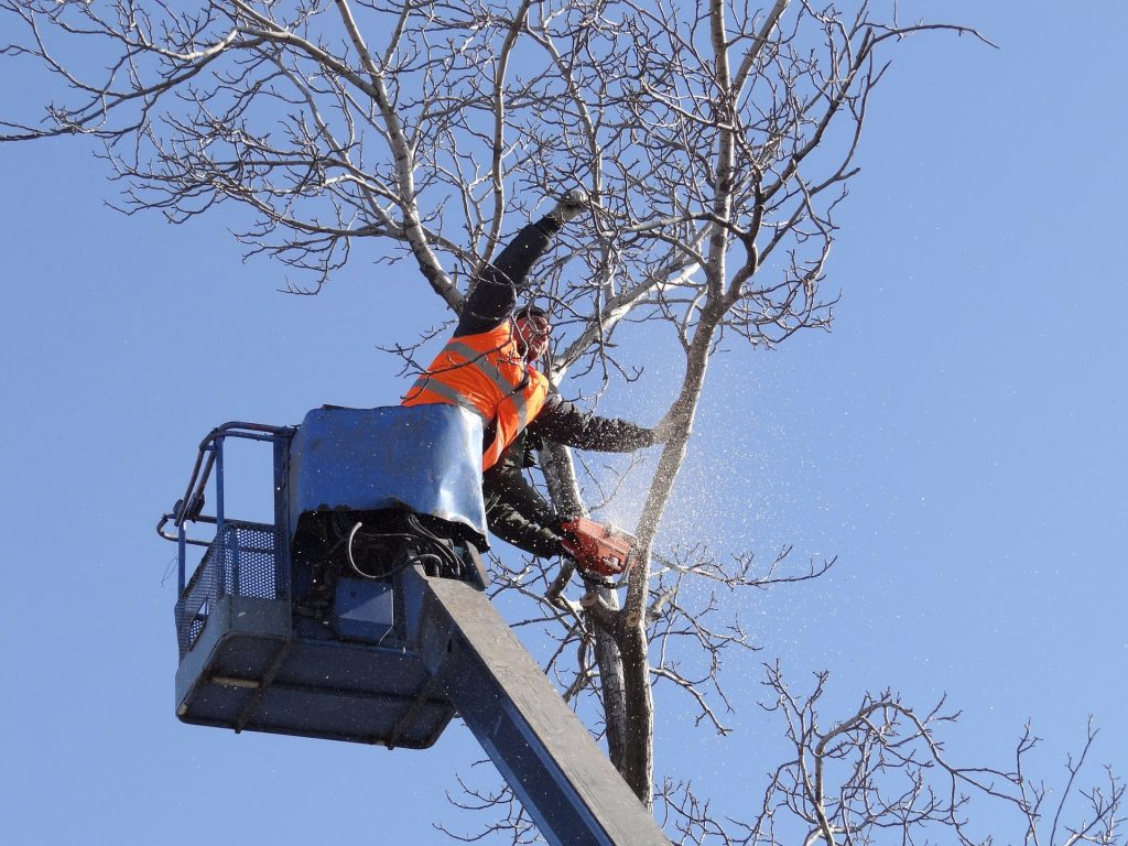 Tree Service and Trimming Chicago