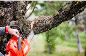 Tree Service Norridge
